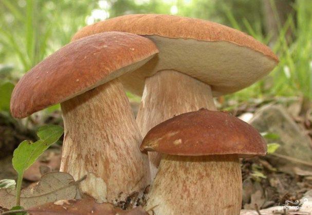 Запеченные белые грибы