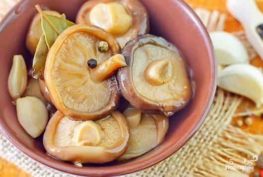 Засолка грибов груздей