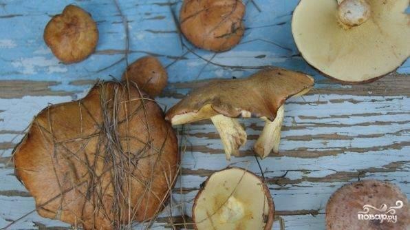 Жареные маслята - пошаговый рецепт с фото на