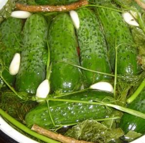 Малосольные огурцы быстрого приготовления в холодной воде - фото шаг 3