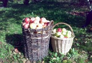 Самогонка из яблок - фото шаг 1