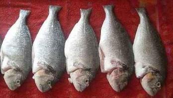 Рыба в фольге на гриле - фото шаг 1