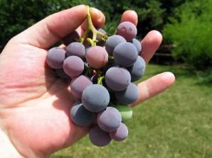 Виноградное желе - фото шаг 1