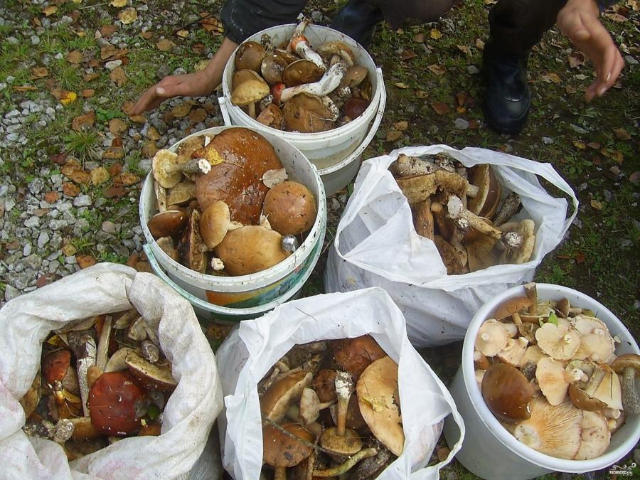 Как приготовить грибную икру на зиму