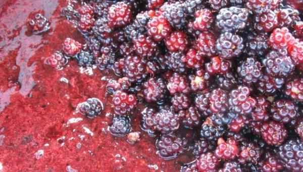 Варенье из черники замороженной - фото шаг 3