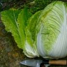 Рецепт Оригинальный салат слау с пекинской капустой