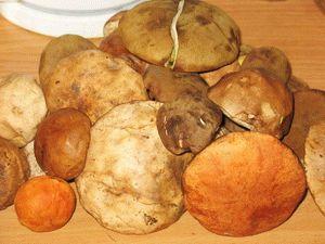 Подосиновики с картошкой - фото шаг 1