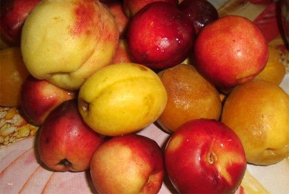 Рецепт Варенье из абрикосов ассорти