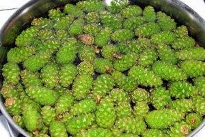 Рецепт Варенье из еловых шишек