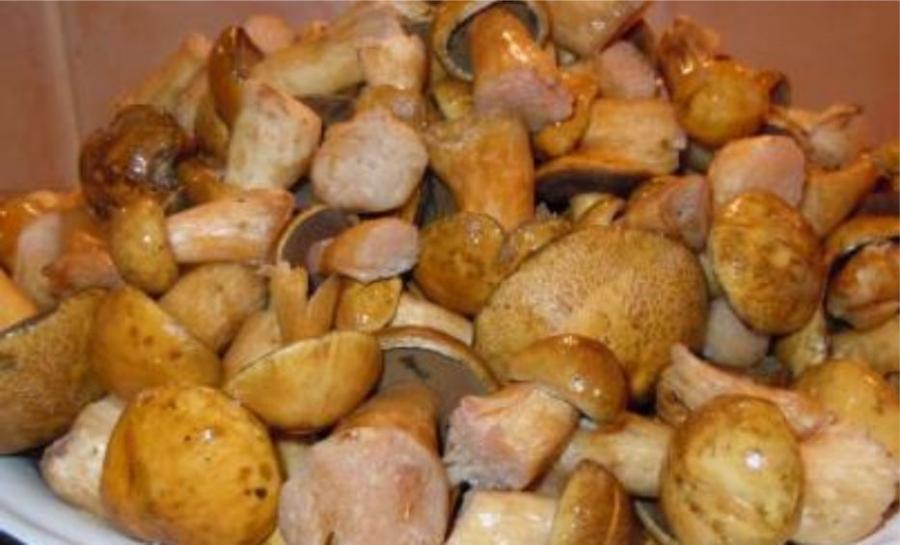 Рецепт Жареные моховики на зиму