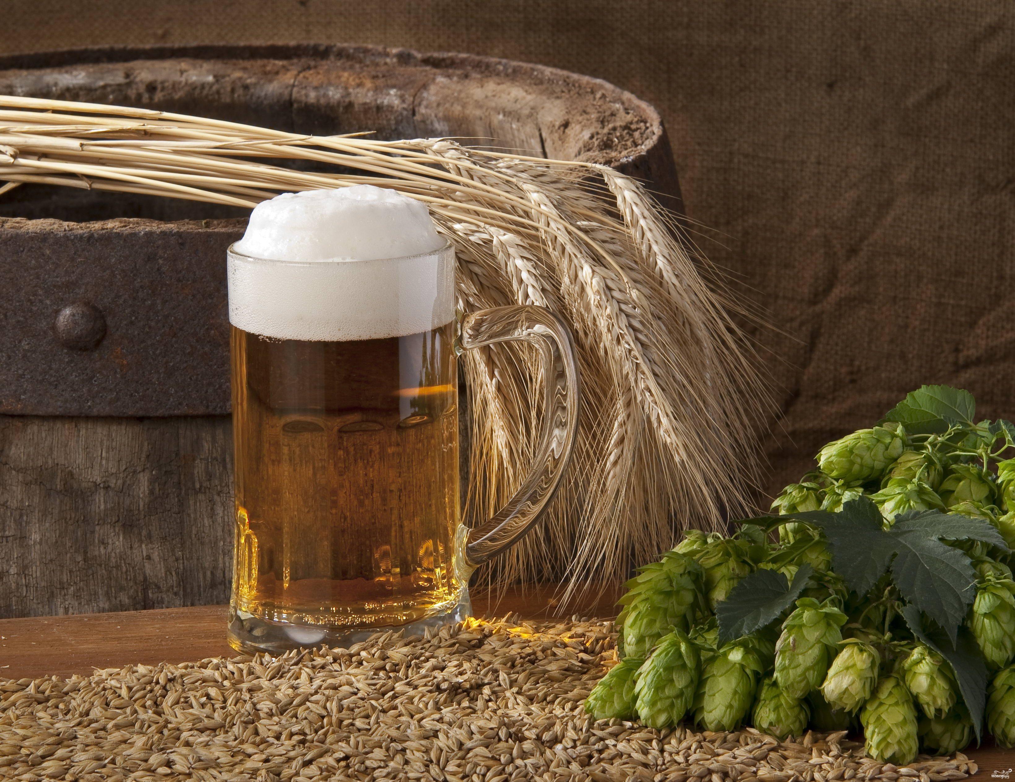 Рецепт Домашнее пшеничное пиво