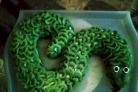 "Торт ""Змея"""
