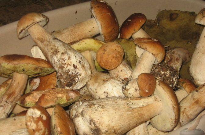 Рецепт Маринованные белые грибы без уксуса
