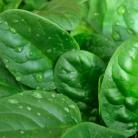 Рецепт Салат из ревеня и шпината