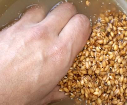 Квас из пшеницы - фото шаг 2