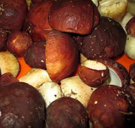 Рецепт Маринованные белые грибы быстрого приготовления