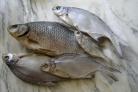 Рыба сухая