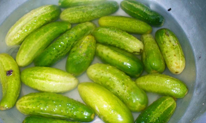 Рецепт Закатка огурцов по-болгарски