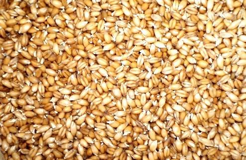 Рецепт Квас из пшеницы