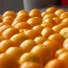 Рецепт Мартини Пряный грейпфрут