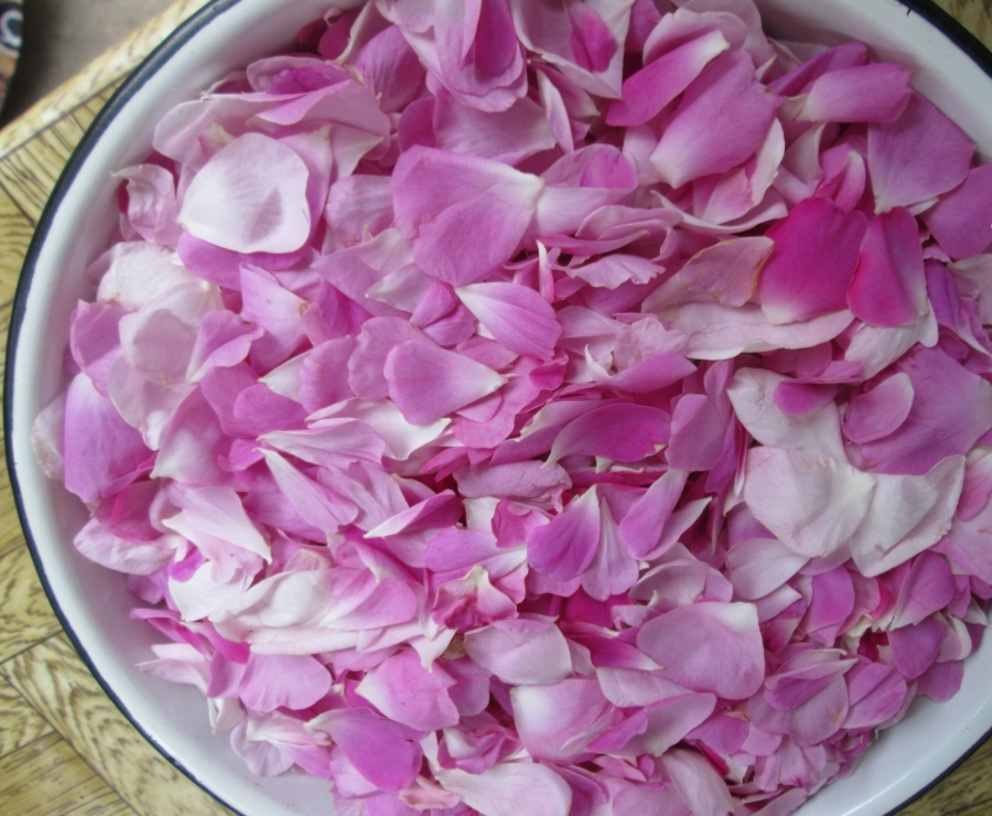 Рецепт Варенье из листьев шиповника