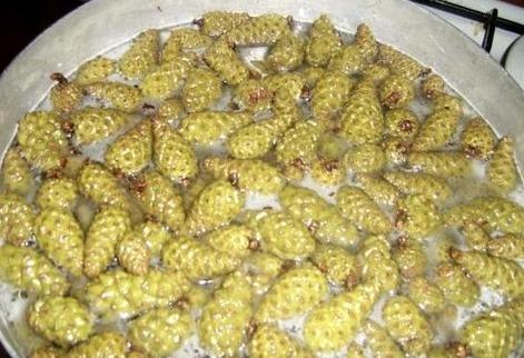 Рецепт Сироп из сосновых шишек