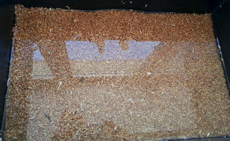 Самогон из пшеницы без дрожжей - фото шаг 1