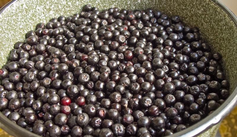 Вино из черноплодки в домашних условиях - фото шаг 1
