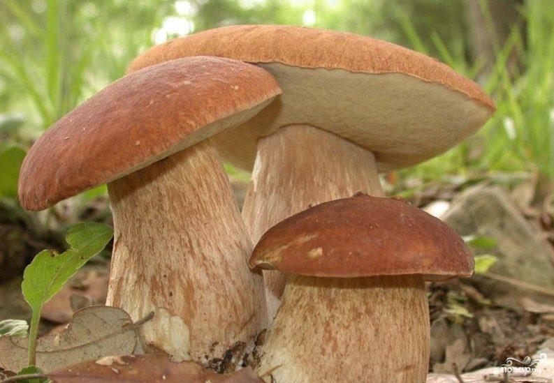 Рецепт Запеченные белые грибы