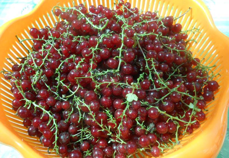 Рецепт Сироп из красной смородины