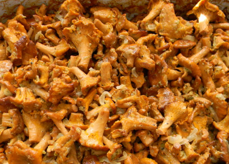 Рецепт Лисички, запеченные в сметане