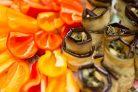 Рулетики из баклажанов с фетой