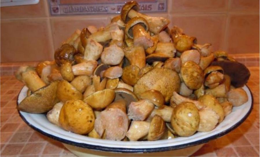 Рецепт Жареные моховики со сметаной