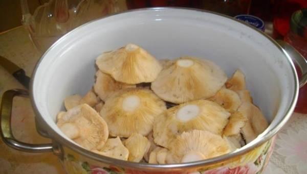 1. Каждый гриб по-своему вкусный. В основном волнушки консервируют на зиму, но я решила поэкспериментировать и сделала тушеные волнушки в домашних условиях. Результат меня порадовал.