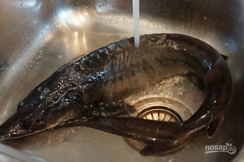 1. Осетр — рыба невероятно вкусная и, если такой подарочек окажется на вашей кухне, разделите его на части и приготовьте не одно блюдо. Я голову и хвост оставила на уху, а серединку решила закоптить горячим способом.