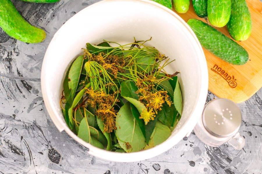 Промойте листья вишни, смородины, хрена, дуба или малины. Выложите их вместе с зонтиками укропа на дно емкости.