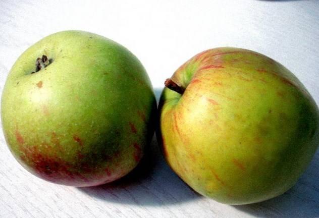 Два больших яблок моем.
