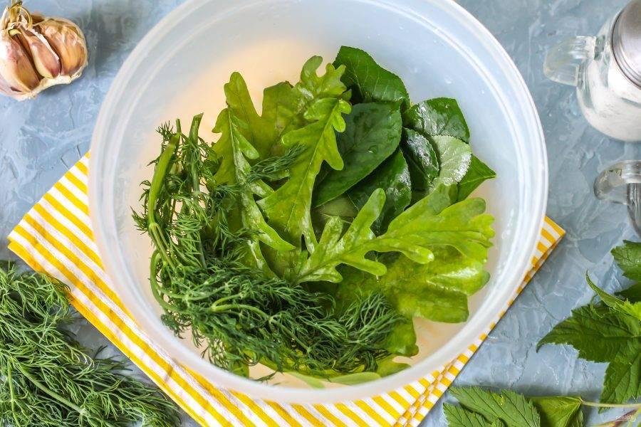Промойте листья дуба или хрена, смородины, вишни и укропа, выложите их в глубокую миску, но не алюминиевую!