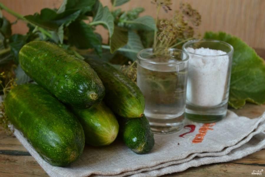 Подготовьте все необходимые ингредиенты. Огурчики замочите на 1-2 часа вместе с зеленью в холодной воде, тогда они станут очень хрустящими.