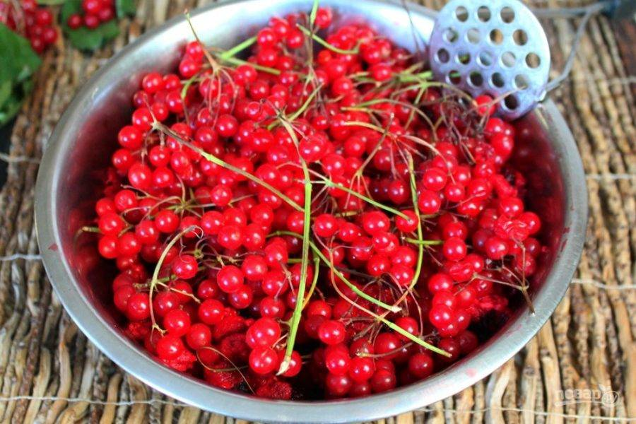 Промытые и высушенные ягоды кладем в миску. Веточки калины можно не обрывать.