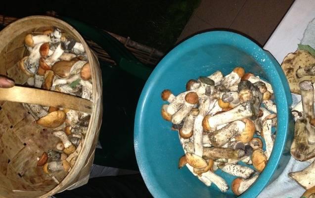 1. Когда в разгаре сезон грибов, я обязательно консервирую подосиновики в домашних условиях. Во-первых, они невероятно вкусные, а во-вторых, эти грибы великолепно сочетаются с любыми блюдами на праздничном столе. Ну и конечно, они отлично дополняют вкус многих блюд и остаются по-прежнему незаменимой закуской.