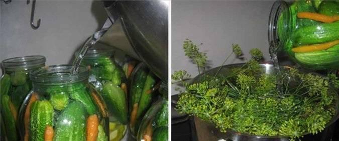 Сливаем воду из банок в большую кастрюлю и добавляем листья смородины и вишни, укроп. Кипятим 10 минут.