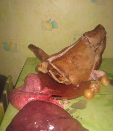 1. Такой паштет получается очень нежным и вкусным. Приправы придадут ему еще более пикантный аромат. Итак, берем свиную голову и потроха (печень, сердце, легкие).