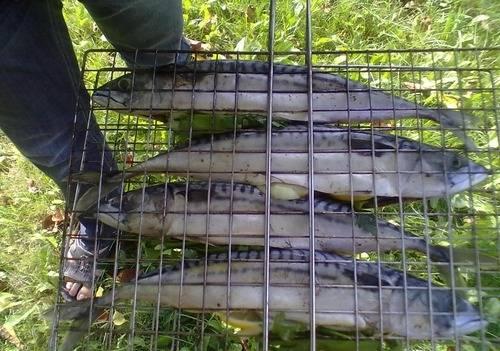 3. Помещаем рыбу на мангал, и оставим, пока не подрумянится