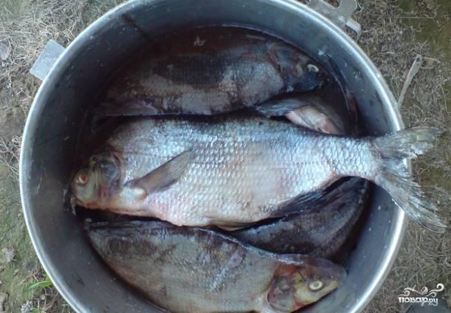 1. Выберите крупного леща. Затем его выпотрошите и хорошенько промойте. Обсушите, промокнув полотенцем. Натрите каждую рыбину крупной солью внутри и снаружи. Оставьте в подходящей посуде на всю ночь. Затем утром следующего дня леща надо хорошо вымочить, меняя 4 раза холодную воду каждые 4 часа. Тщательно прополощите от соли каждую рыбину.