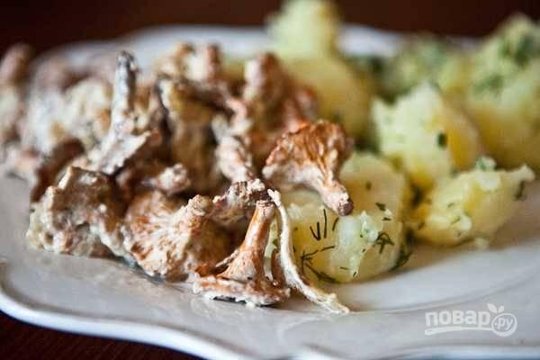 Подавайте лисичке горячими с отварным картофелем, посыпав мелко нарезанной зеленью. Приятного аппетита!