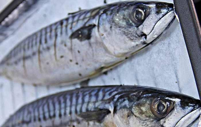 2. Чтобы рыбка лучше пропиталась специями нужно сделать небольшие надрезы до кости. В зависимости от размера скумбрии, их может быть от 3-4 до 8. Эти кармашки также можно использовать для овощей, вложив туда ломтики помидора, сладкого перца или картофеля, например.