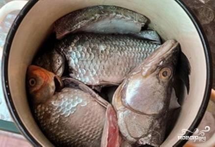 Рыбу промойте. У мелкой рыбы удалите жабры и внутренности (чешую оставьте), у судака отделите голову и хвост, тушку выпотрошите и очистите от чешуи. Мелкую рыбу, голову и хвост сложите в кастрюлю, залейте холодной водой и доведите до кипения.