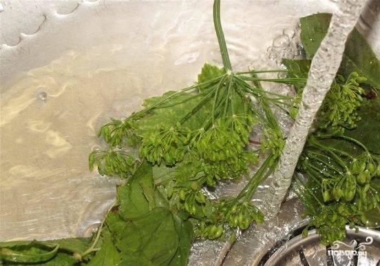 Огурцы хорошо промойте и обсушите. Листья смородины и вишни, зонтики укропа тоже помойте, просушите.