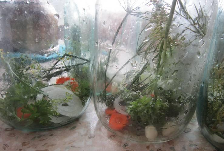 1. Огурцы помоем и замочим в холодной воде на 6 часов. Это для того, чтобы они не впитали рассол и не стали мягкими. Лук и морковь режем кружочками. Раскладываем в каждую банку по два-три кружка. Сюда же - зонтики укропа, петрушку и чеснок.